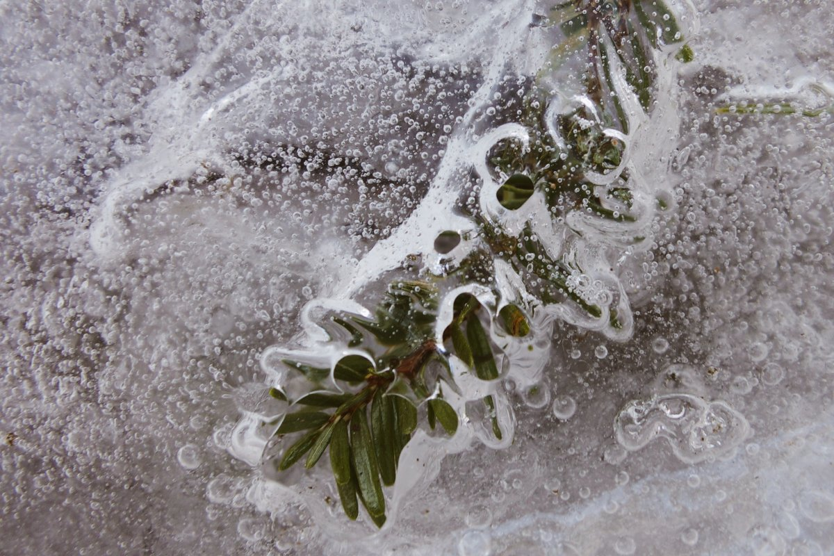 Title: Trapped leaves 2 | Author: Annette Dubois | Source: Flickr | License: CC BY-NC 2.0 https://www.flickr.com/photos/73689755@N06/13445720845/in/photostream/