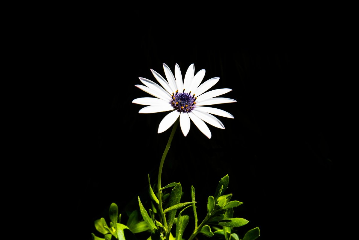 Untitled photograph of a flower, by Master Wen (License: CC0)