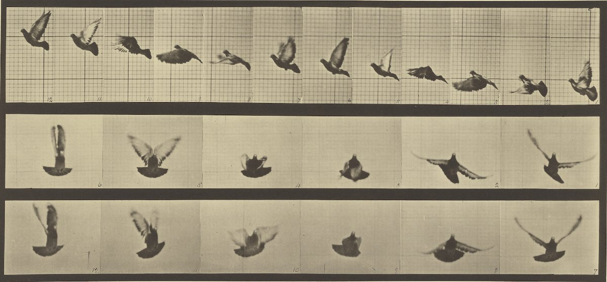 Animal Locomotion; Eadweard J. Muybridge (American, born England, 1830 - 1904); 1887; Collotype; 17.8 x 39.4 cm (7 x 15 1/2 in.); 84.XM.628.49. Courtesy of The Getty Museum