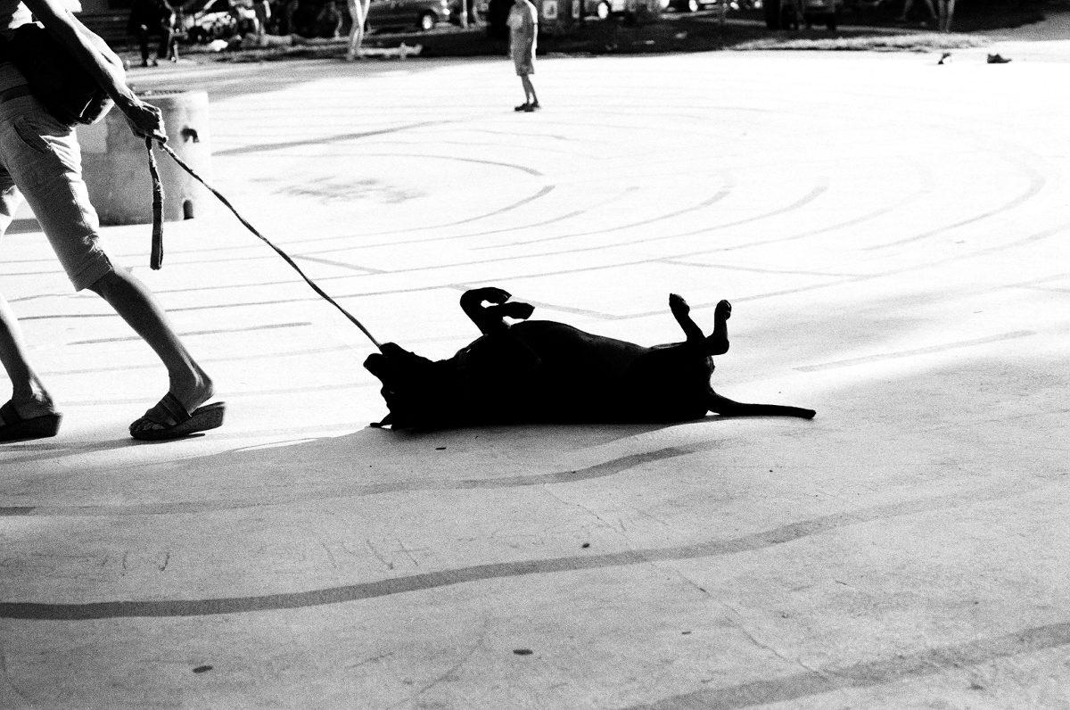 Title: Stubborn dog | Credit: darenmiles