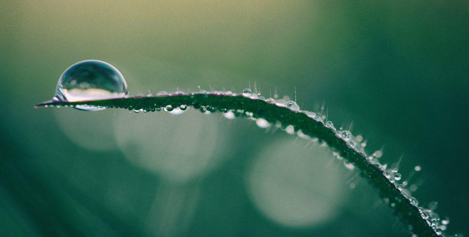 Single bead of water