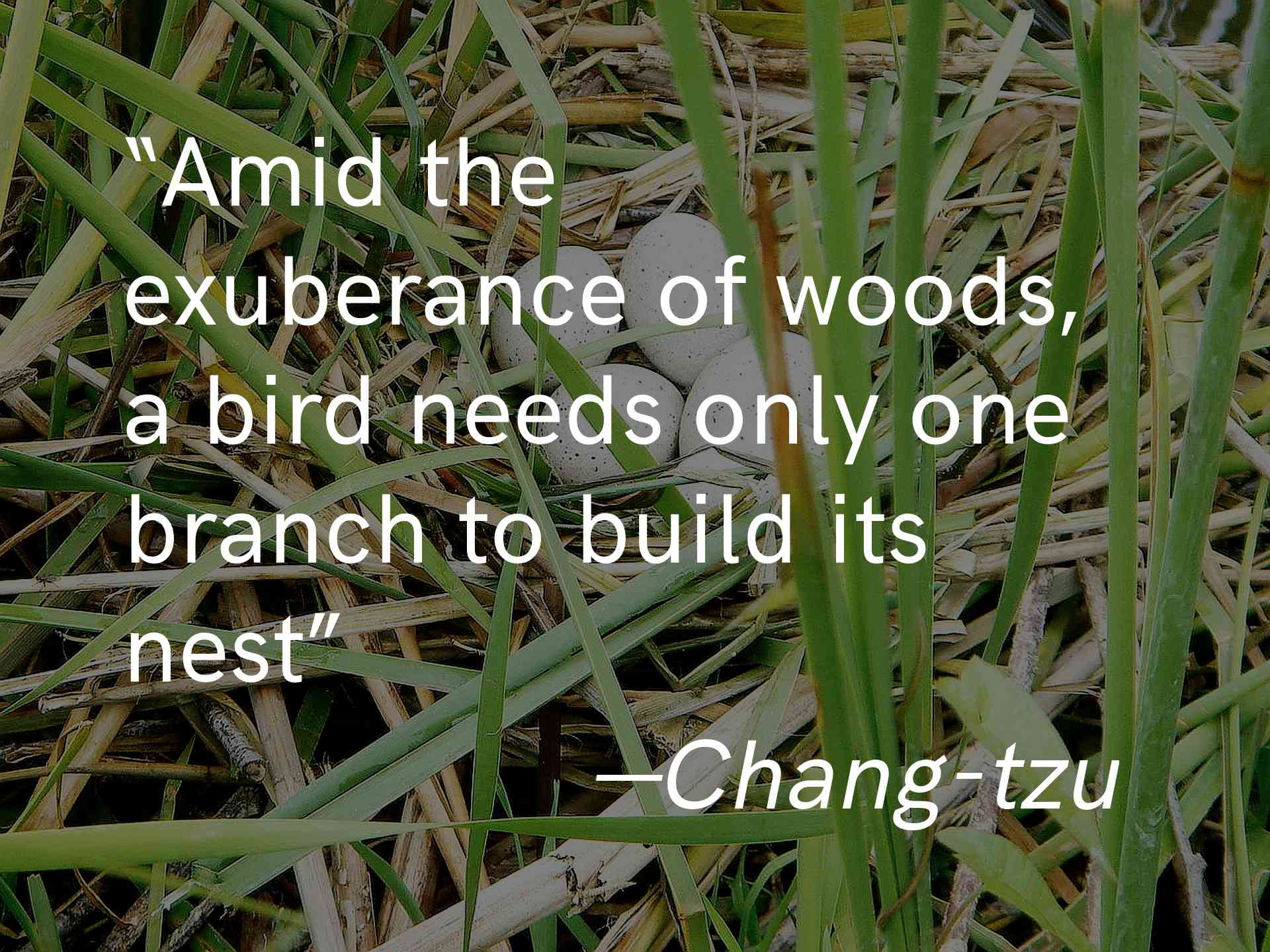 """""""Amid the exuberance of the woods, a bird needs only one branch to build a nest"""" -Chang-tzu"""